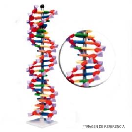 Modelo DNA doble hélice